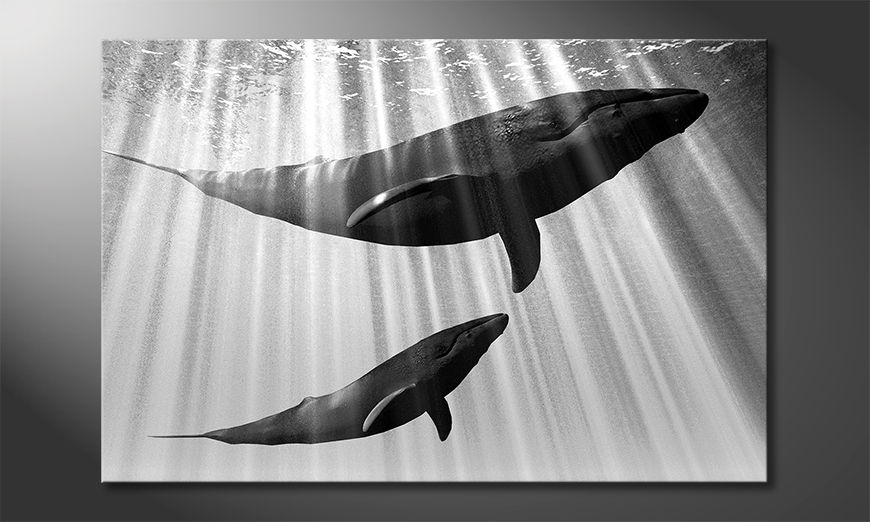 Arredamento moderno Whales