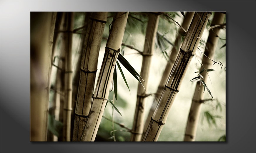 Bamboo Forest tela
