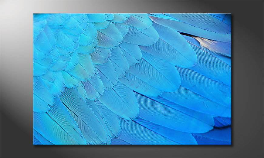 Bird-Feathers-quadro