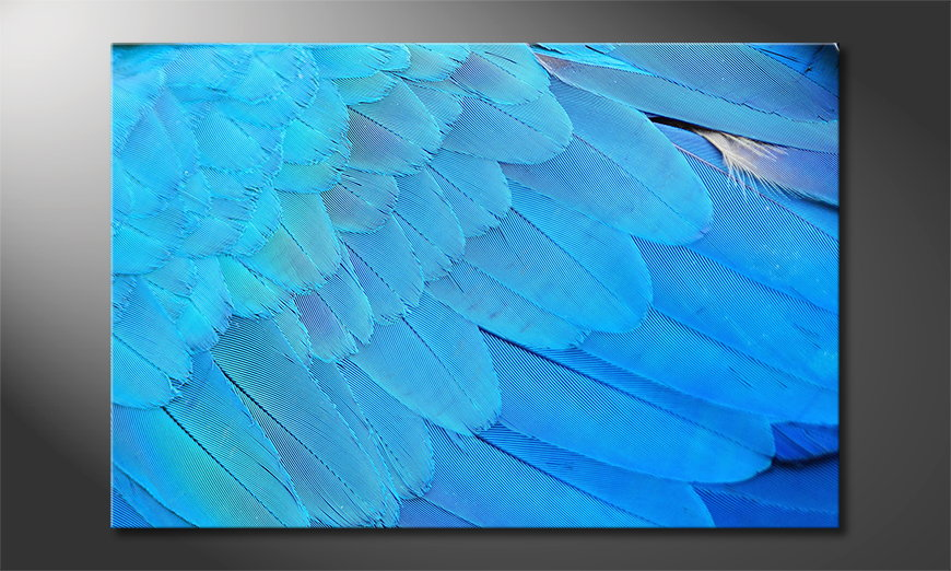 Bird Feathers quadro