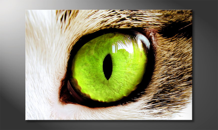 Cats Eye quadro