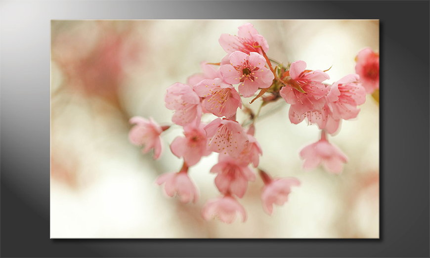 Cherry Blossoms quadro