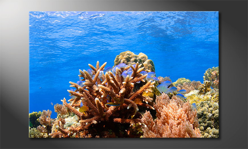 Corals Reef quadro