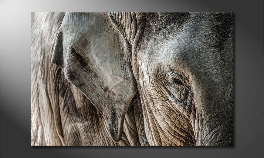 Eye of Elephant tela