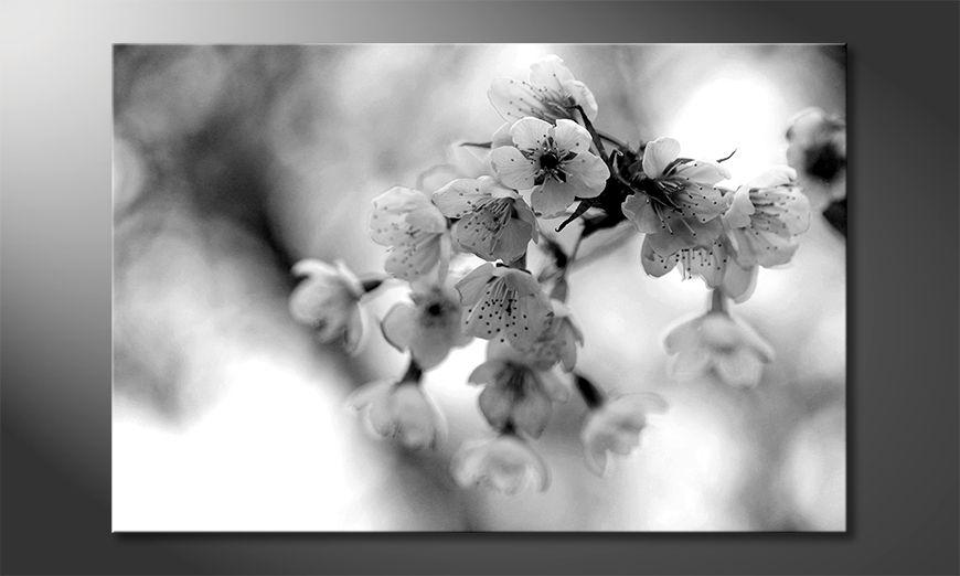 Il quadro stampati Cherry Blossoms