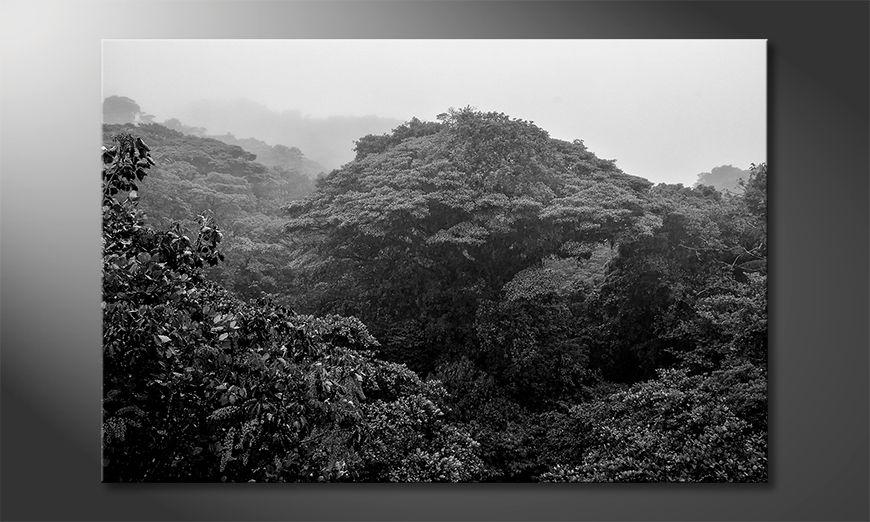 Il quadro stampati Jungle
