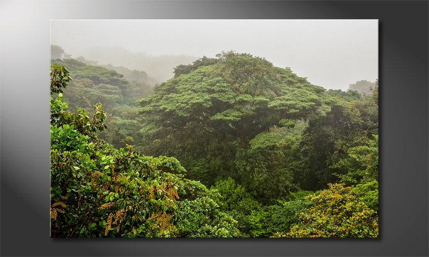 Jungle tela