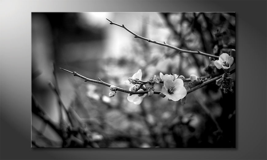 La bella pittura Beautiful Blossoms