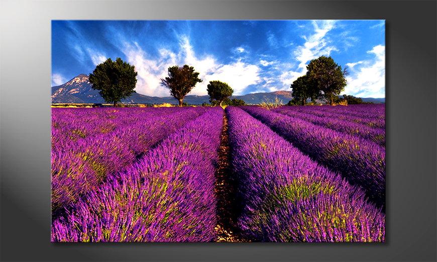 Lavender quadro