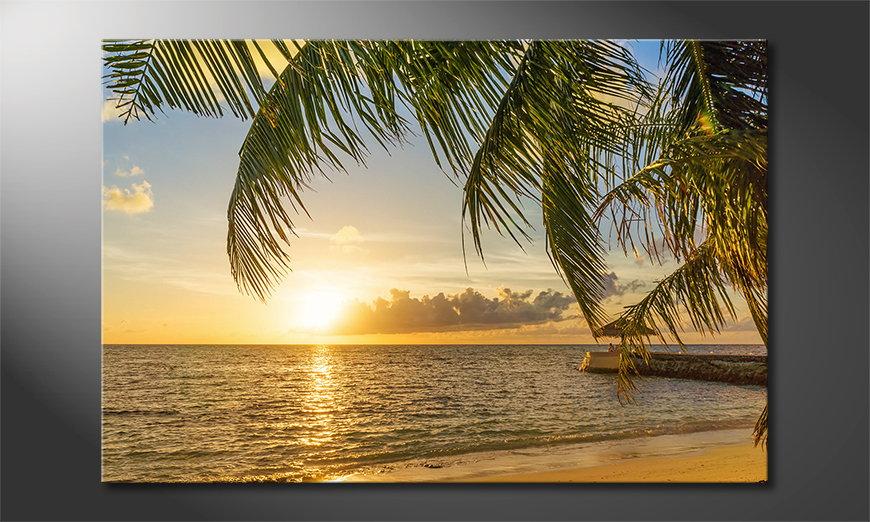 Maledives tela