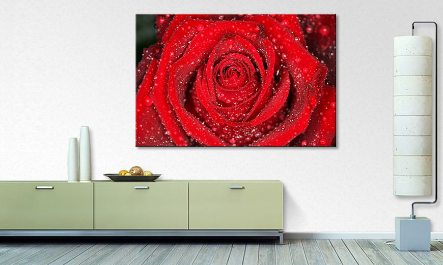 Morning Rose quadro