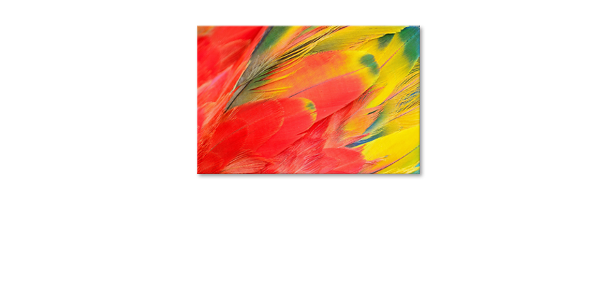 Parrot-Feathers-quadro