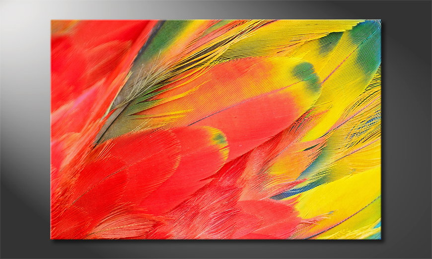 Parrot Feathers quadro