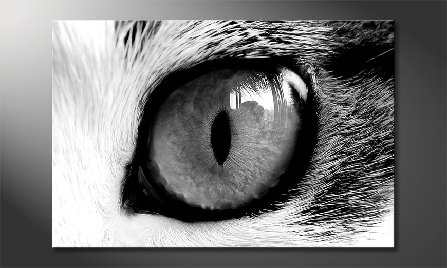 Quadro Cats Eye