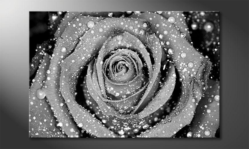 Quadro Morning Rose