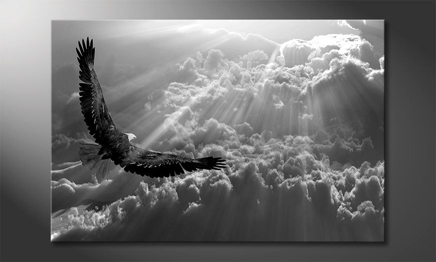 Quadro moderno Eagle In Flight