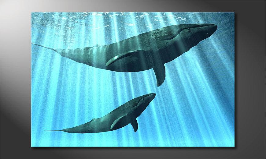 Whales quadro