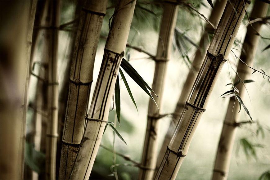 Carta da parati con foto Bamboo da 120x80cm