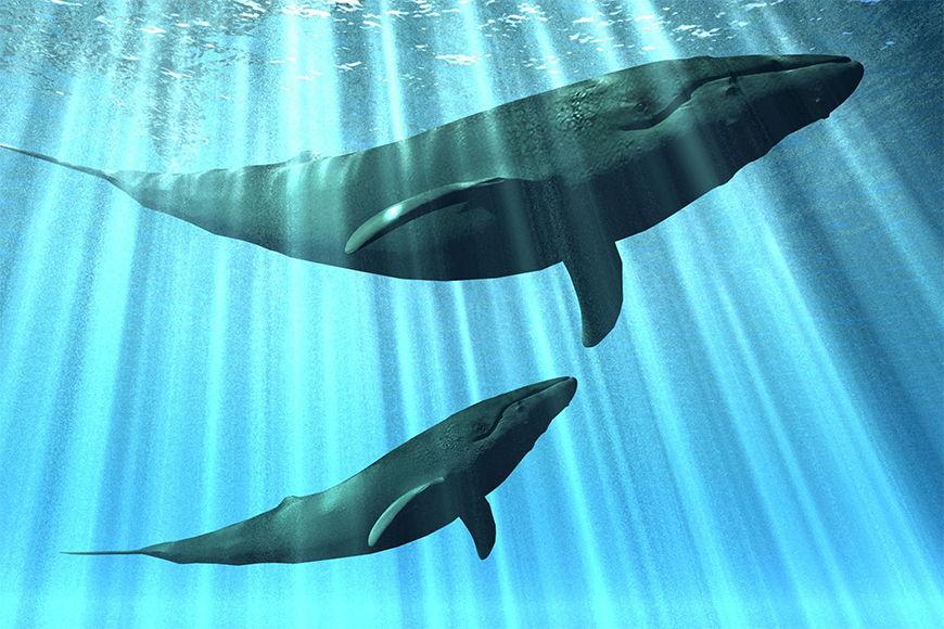 Carta da parati con foto La balene in 6 dimensioni