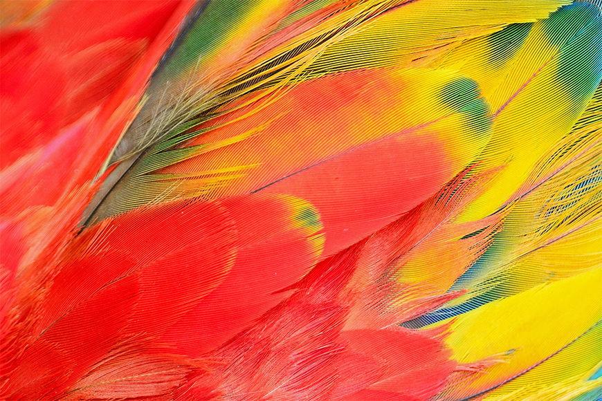 Carta da parati con foto Momenti pappagallo da S a XXL