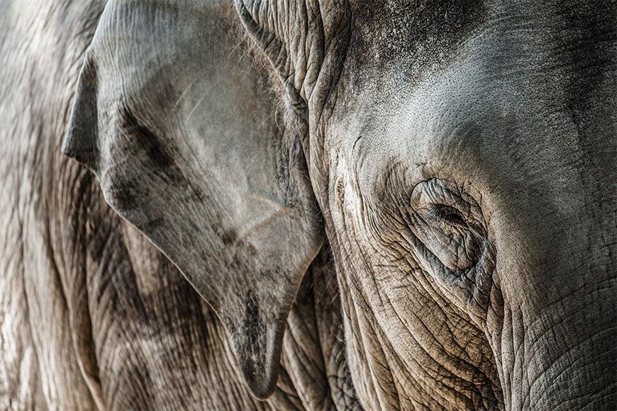 Carta da parati con foto Pelle di elefante da 120x80cm