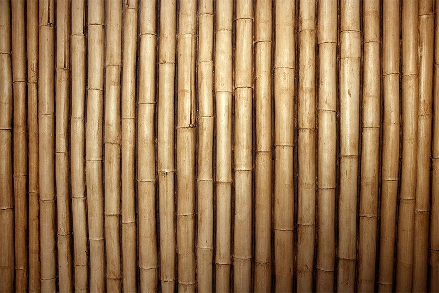 Carta da parati con motivo naturale: Bambù da S a XXL
