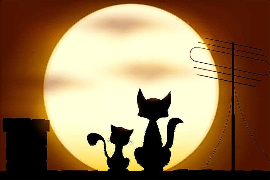 La carta da parati TNT Romantic Cats