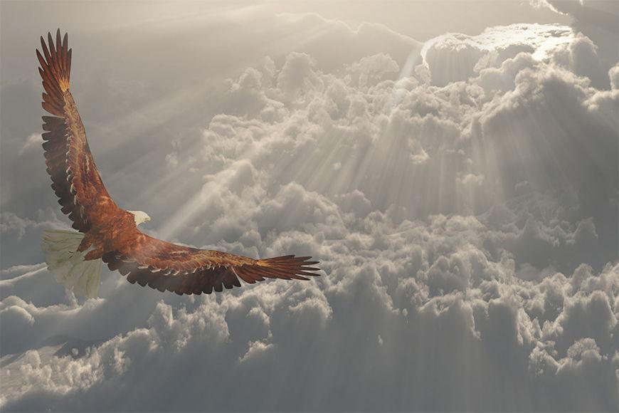 Motivi naturali Aquila volante da S a XXL